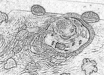 Возраст для купания новорожденных с использованием круга на шею