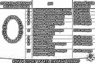 Сколько молочных зубов у детей — когда выпадают, сколько должно быть у ребенка