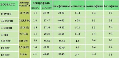 Общий анализ крови в 3 месяца норма