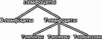 Лимфоциты в крови до года норма
