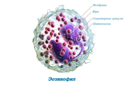 Эозинофилы 7 4