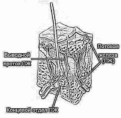 Потница на теле у ребенка без температуры