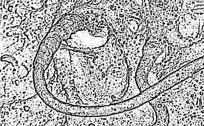 Сколько активны сперматозоиды 9