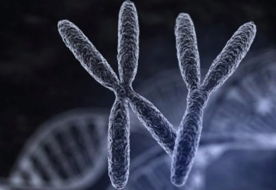 Сколько активны сперматозоиды 40