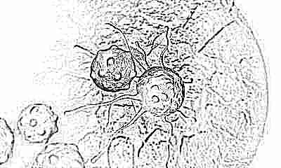 Можно ли ребенку давать раков