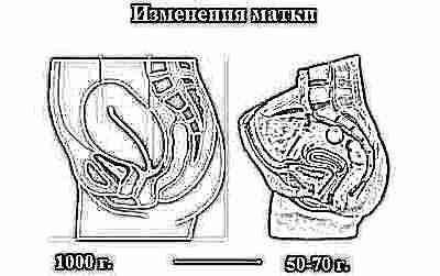 Сколько сокращается матка после родов и как это ускорить?