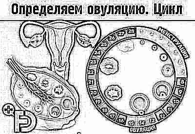 Определение срока родов по последним месячным
