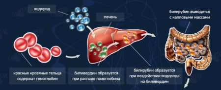 Норма билирубина у новорожденных в крови