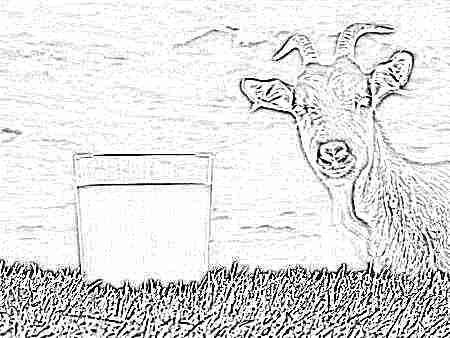 Как давать козье молоко детям до года
