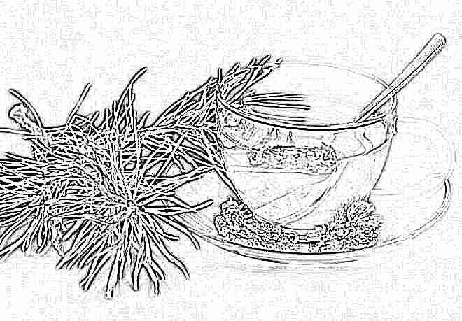 Чай с иголок сосны