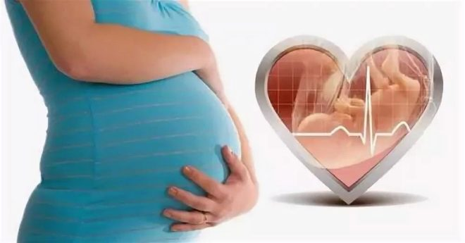 Можно ли определить пол ребенка по сердцебиению