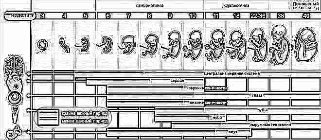 Как посчитать срок беременности по менструации