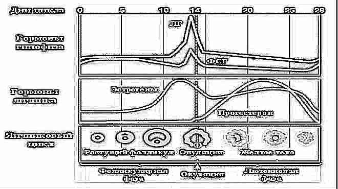 Овуляционная фаза какой день цикла 38